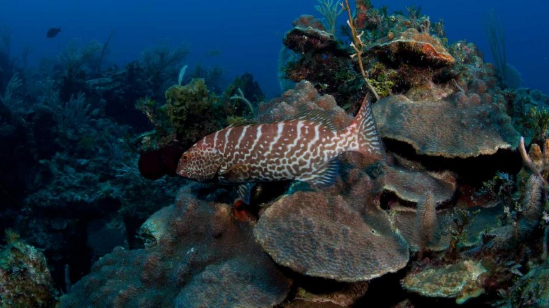 Grouper on the reef – Brian Kakuk