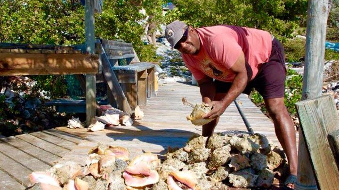 Chester gathers conchs for his scrumptious dishes. – Mr. Chester Darville, Flo's Conch Bar