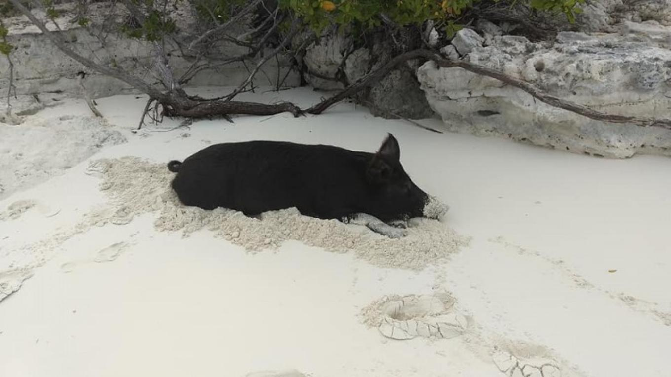Think I'm going to just lay here and snuggle in the sand! – Captain Yan Turnquest & Guests