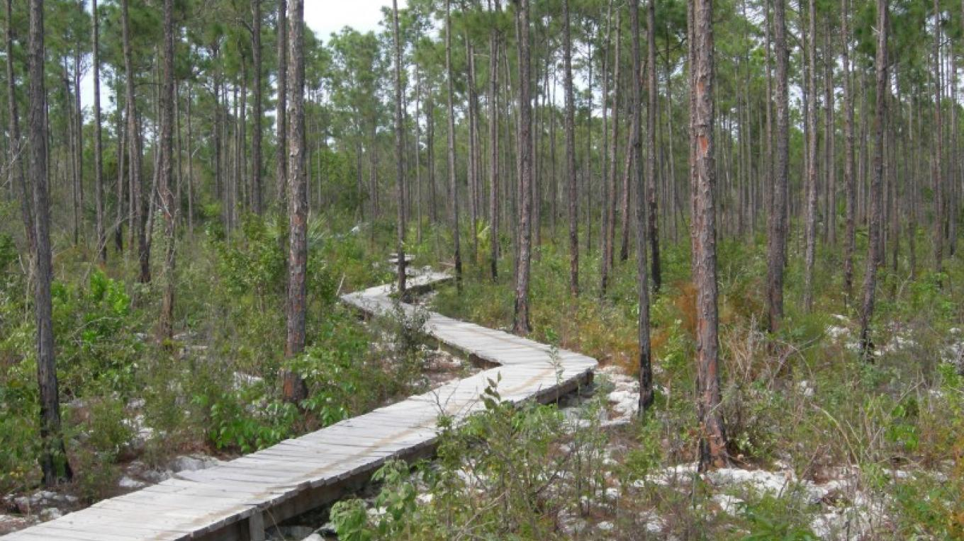 Photo of Pine Forest. – Bahamas Ministry of Tourism/ The Nature Conservancy