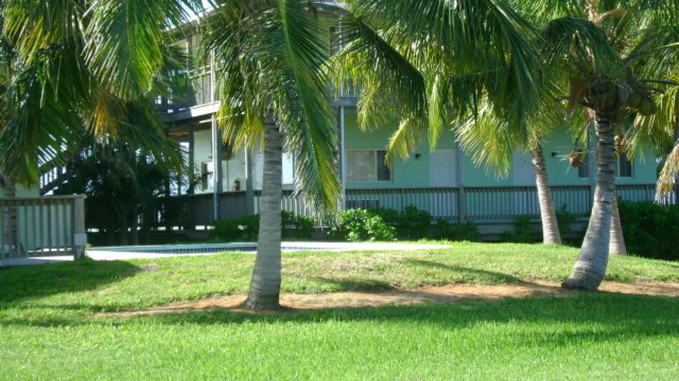 Palm trees surrounding our fresh water pool – Janice Darville Tolas