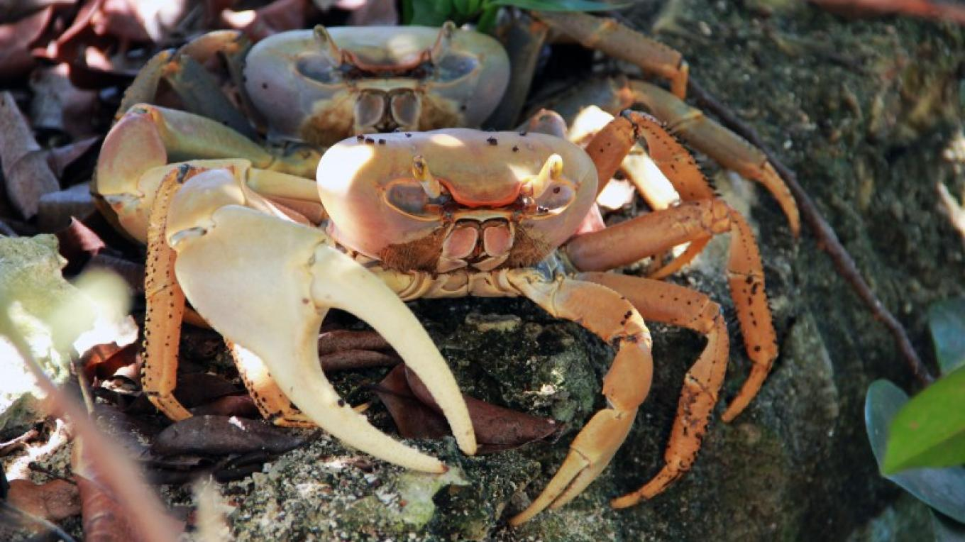 Picture of Land Crab. – Ministry of Tourism