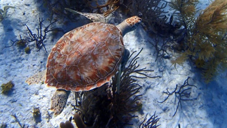 Turtle – Miller's Dive Shop