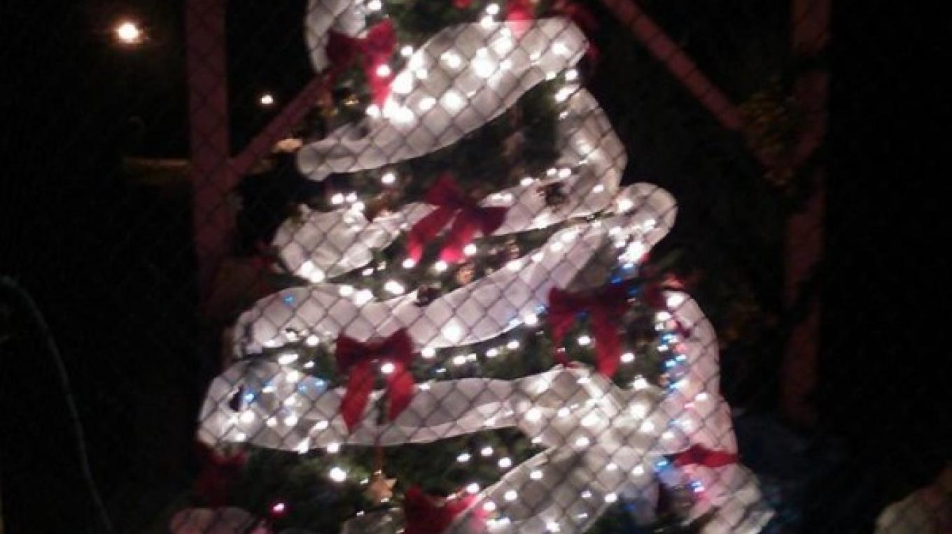 Berry Islands Christmas Fest - Lighting of the Yuletide Tree – Berry Islands Tourism Representative