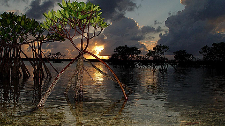 Mangroves East Well Sunset – Bimini Big Game Club Resort and Marina