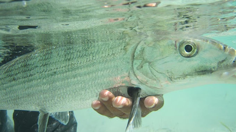 bonefish, we catch and release – Gabrielle Douglas