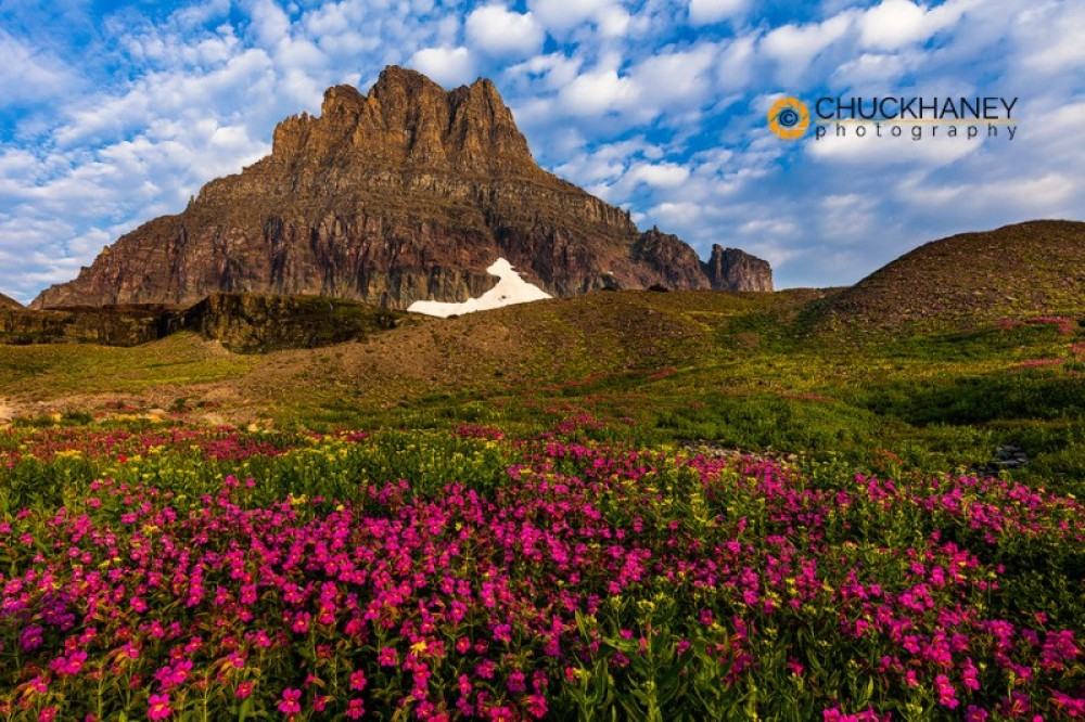 Wildflowers at Logan Pass – Chuck Haney