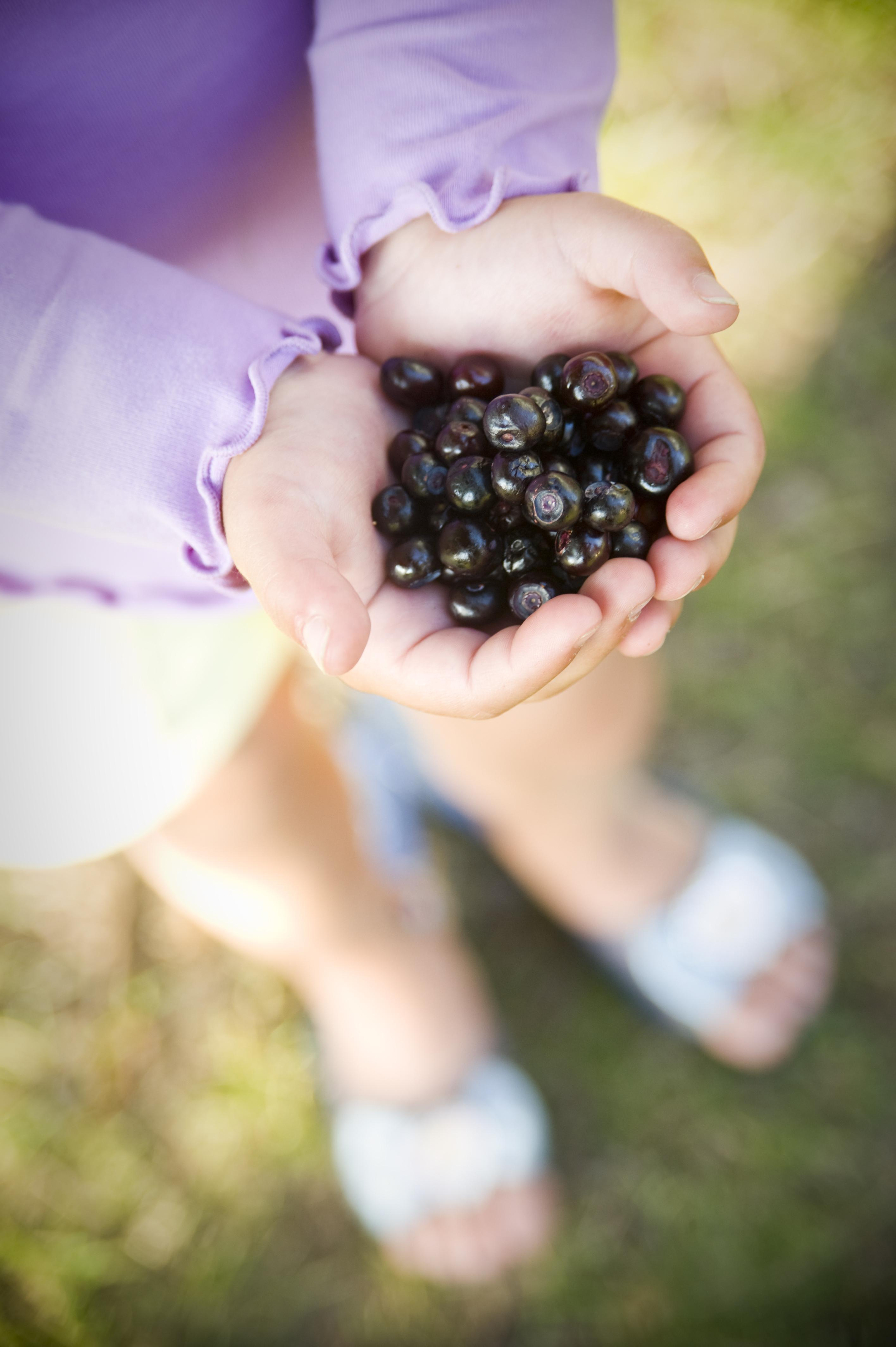 Huckleberries are a favorite local treat // Photo: Visit MT