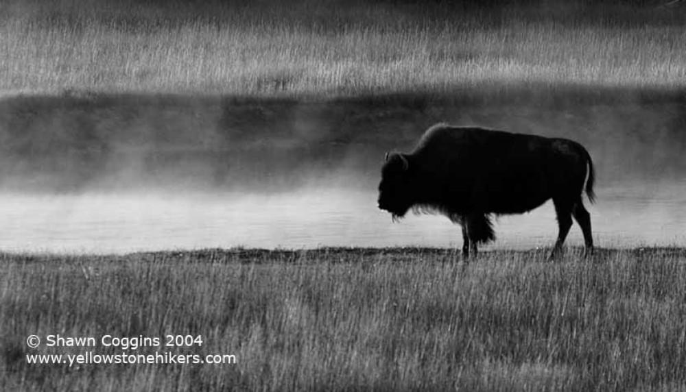 Buffalo Mist – Shawn Coggins