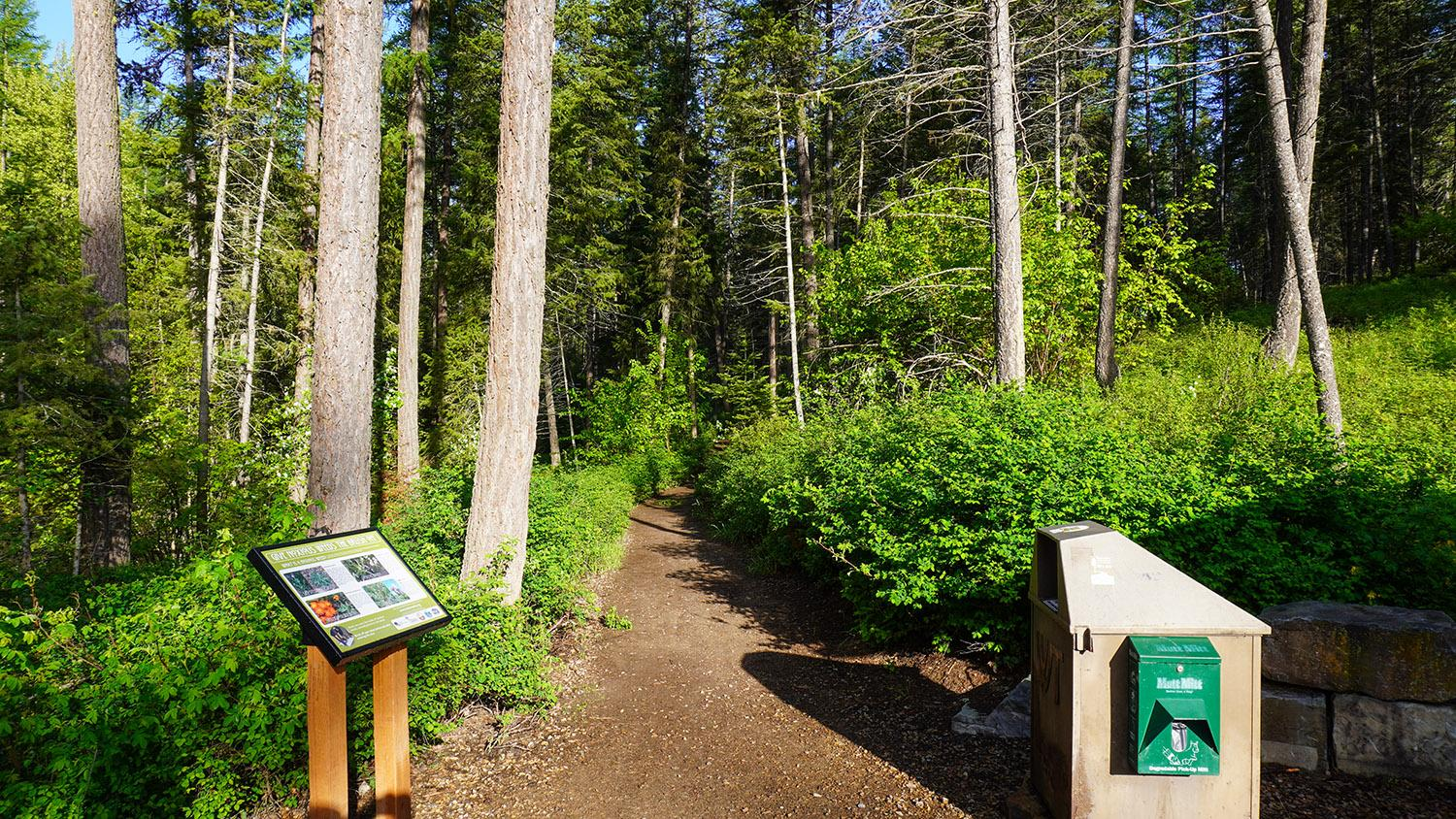 The Whitefish Trail.