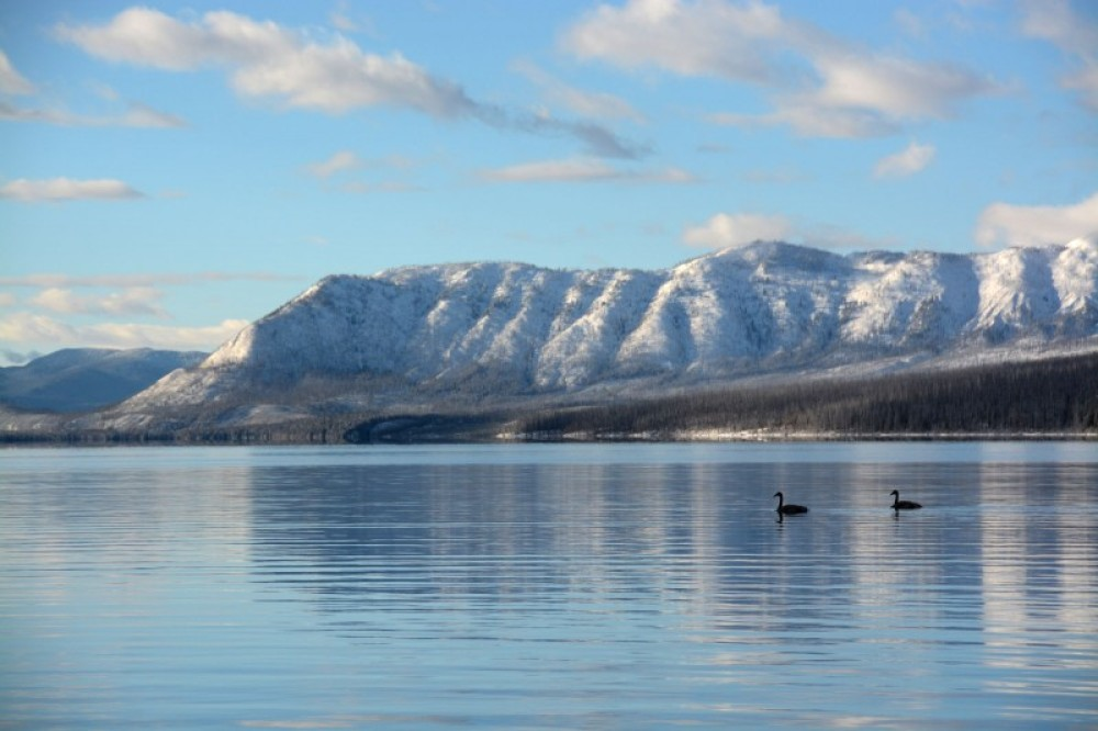 Swans in the reflection of Apgar Mountain on a pristine morning in Glacier. – Devin Schmit
