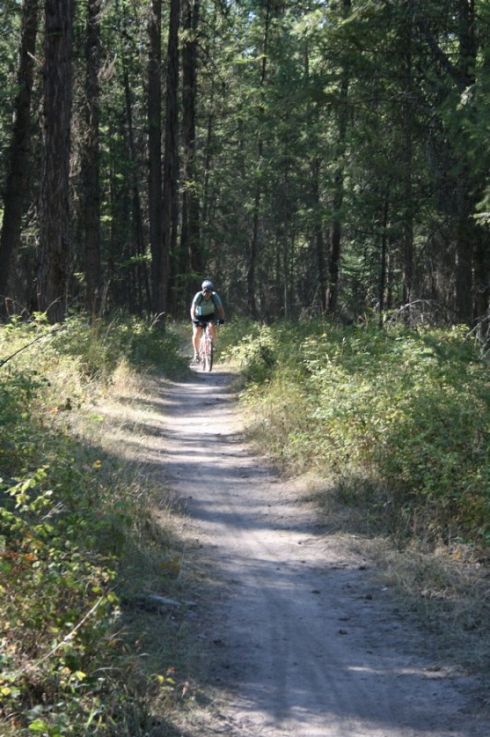 Riding the single track trails of the Pigs Farms area. – John Frandsen