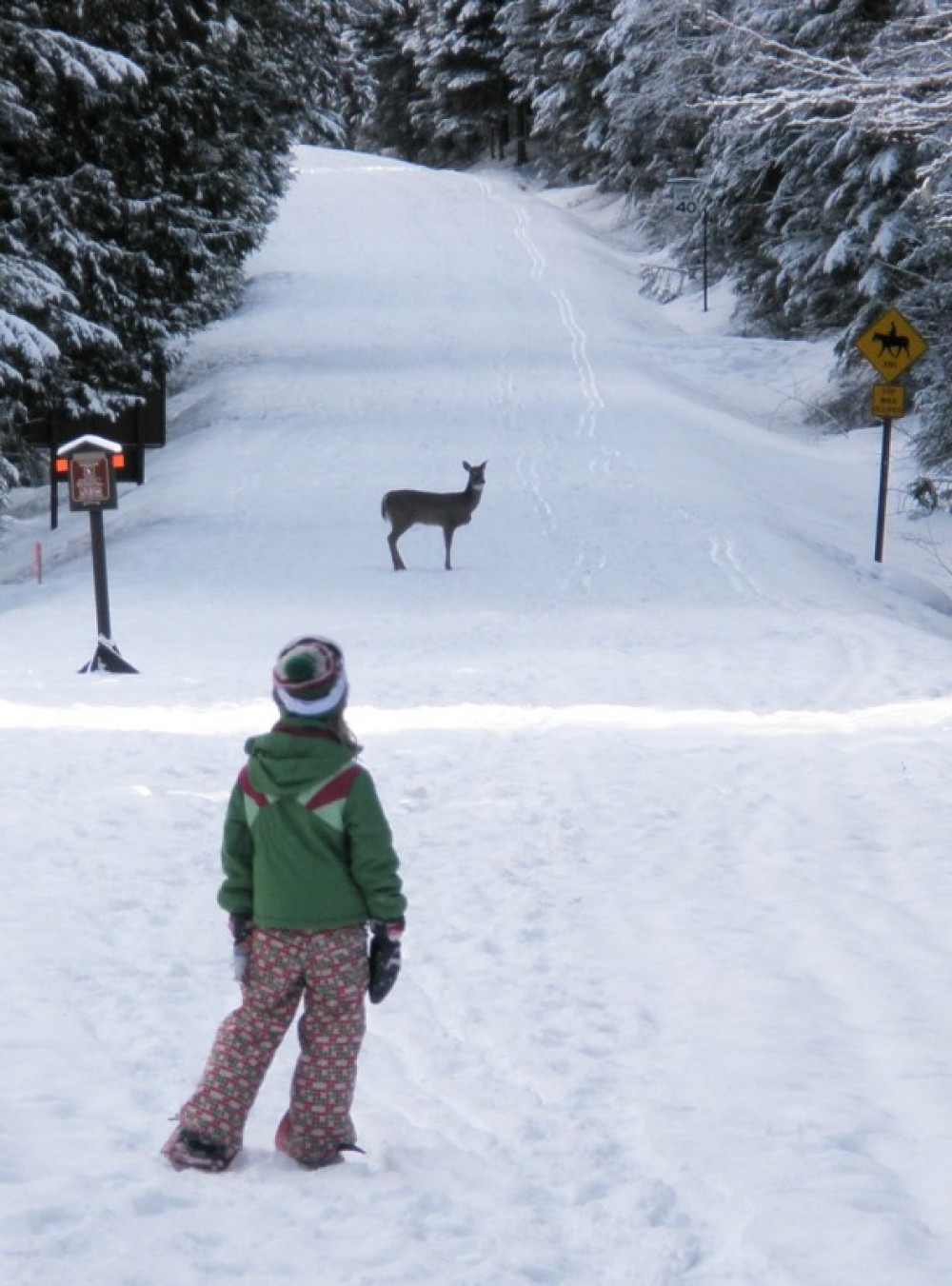 A lone doe crosses the Sun Road at the start of a morning tour. – Devin Schmit