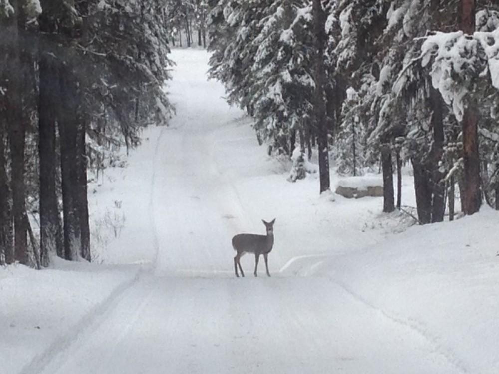 Winter Wilderness To Explore – Cricket Butler