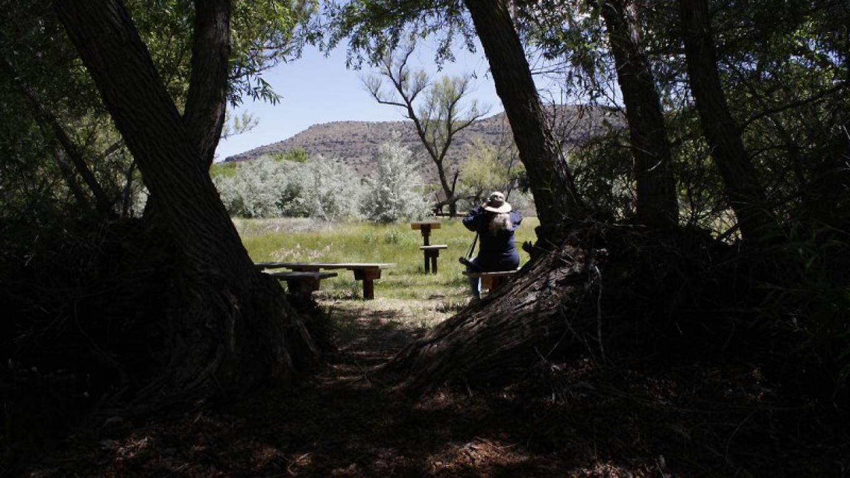 Looking through forest toward Split Willow. – Dennis Tomko
