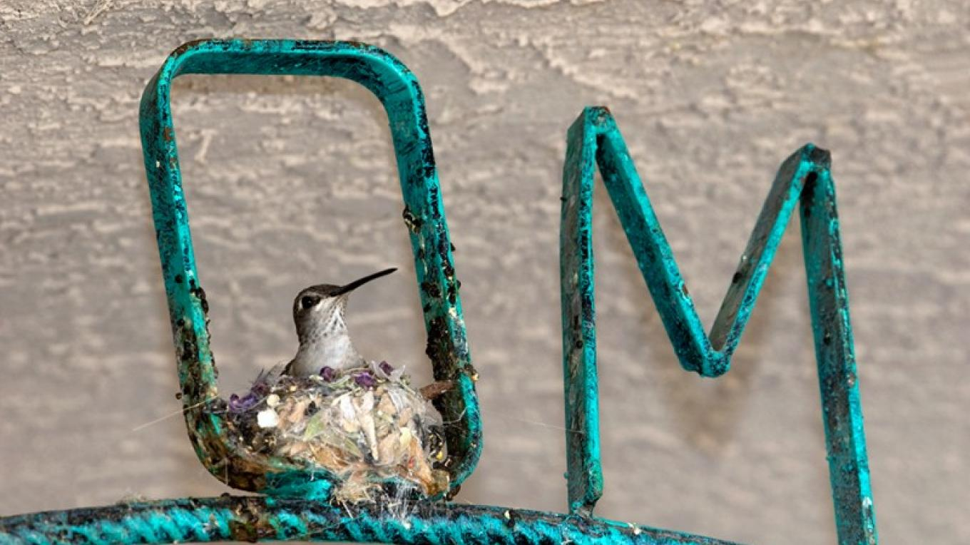 """A black-chinned HummerMom nested in a """"Welcome"""" sign, posing for 'There's No Place Like OM.' – Beth Kingsley Hawkins"""