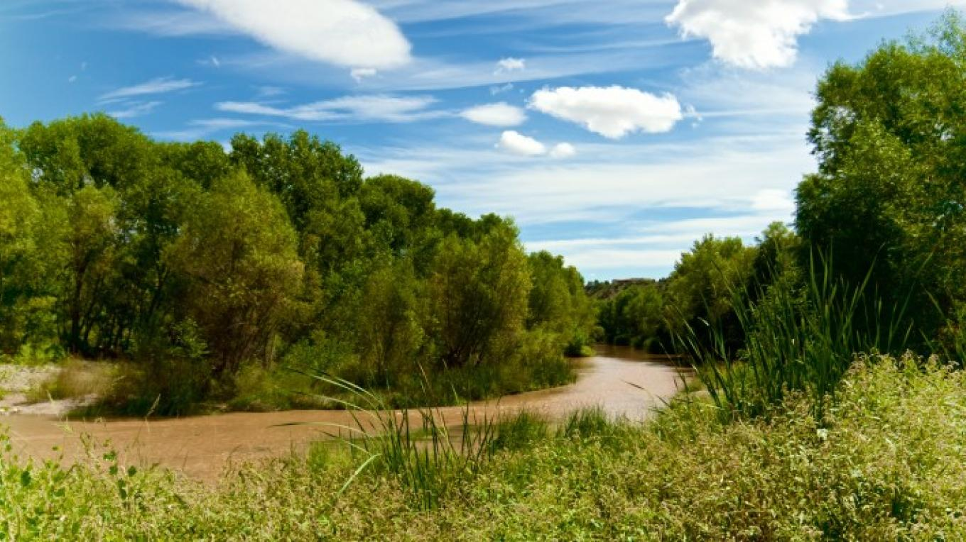 This is our backyard! The gorgeous Verde River