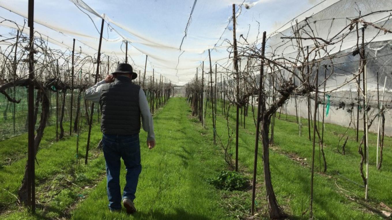 Walking the covered vineyard – SL MESA