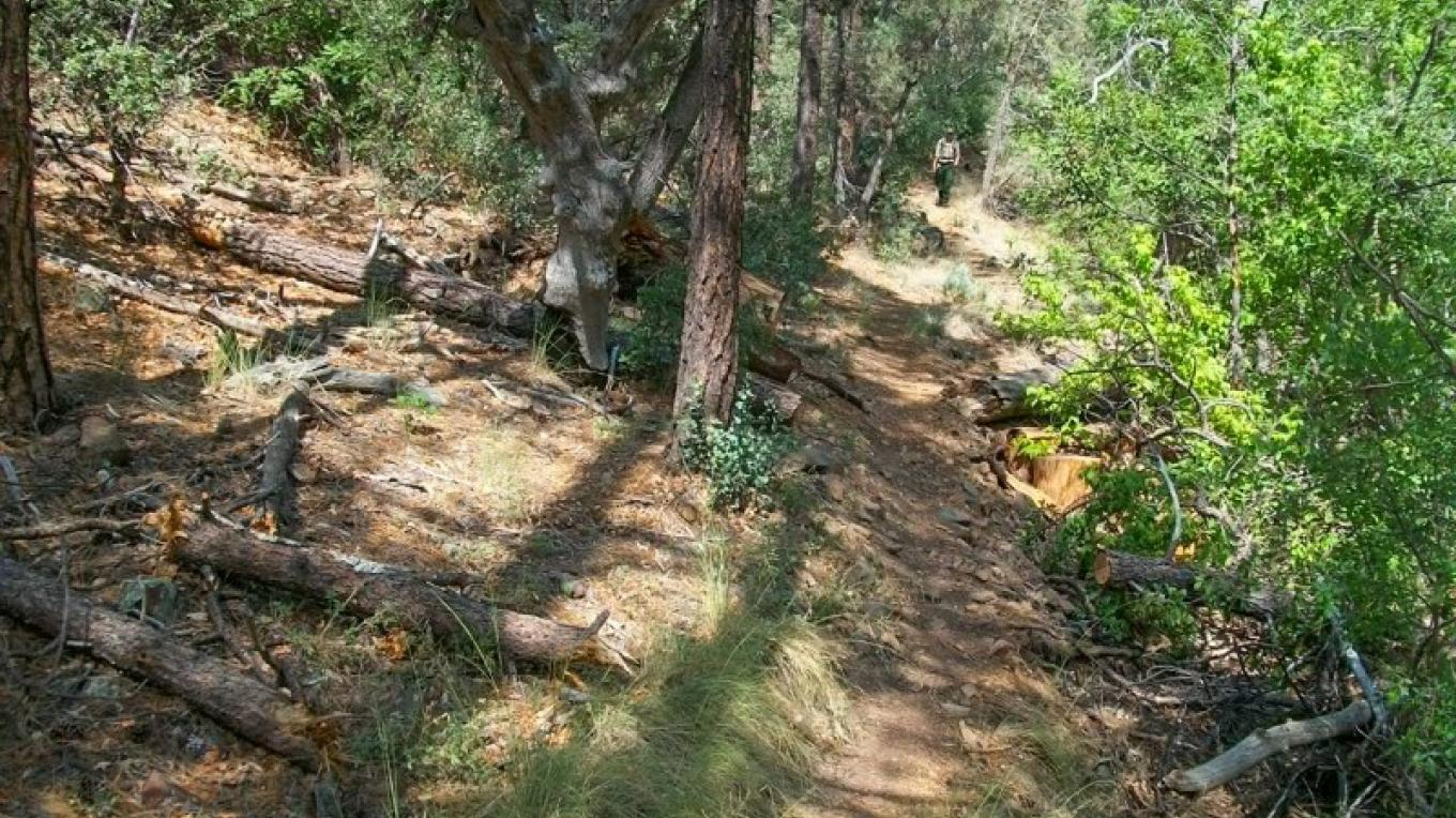 Trail users get some shade as the trail gains in elevation. – USDA Forest Service
