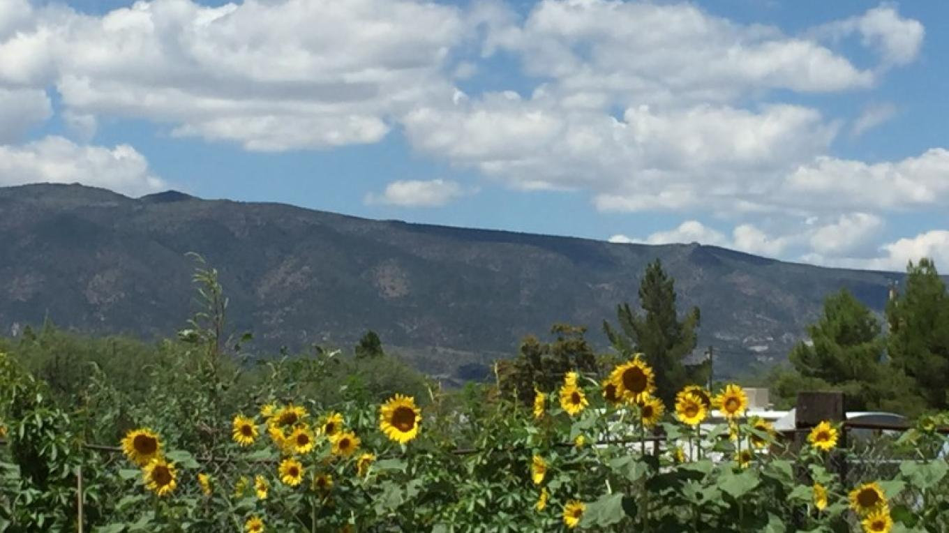 The sunflower wall - summer has arrived – IM MESA