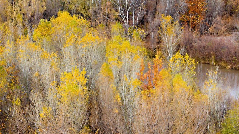 The Verde River in Autumn – Doug Von Gausig