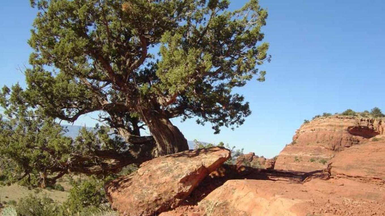 Part way up – William Bohan
