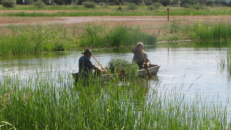 Sedona Wetlands – Lee Luedeker
