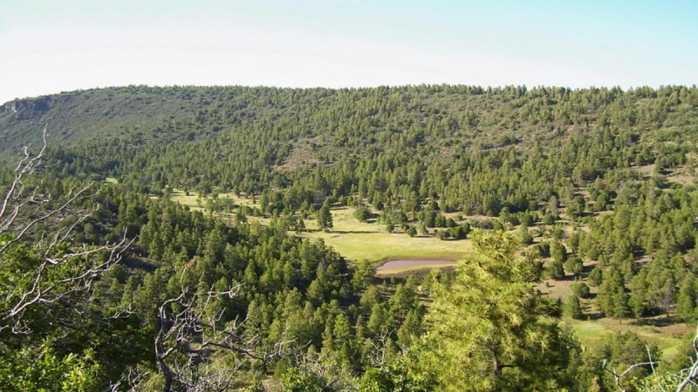Woodchute Wilderness – USDA Forest Service