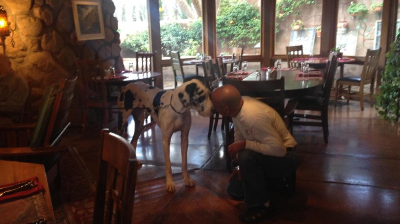 El Portal Pet Friendly Sedona Hotel