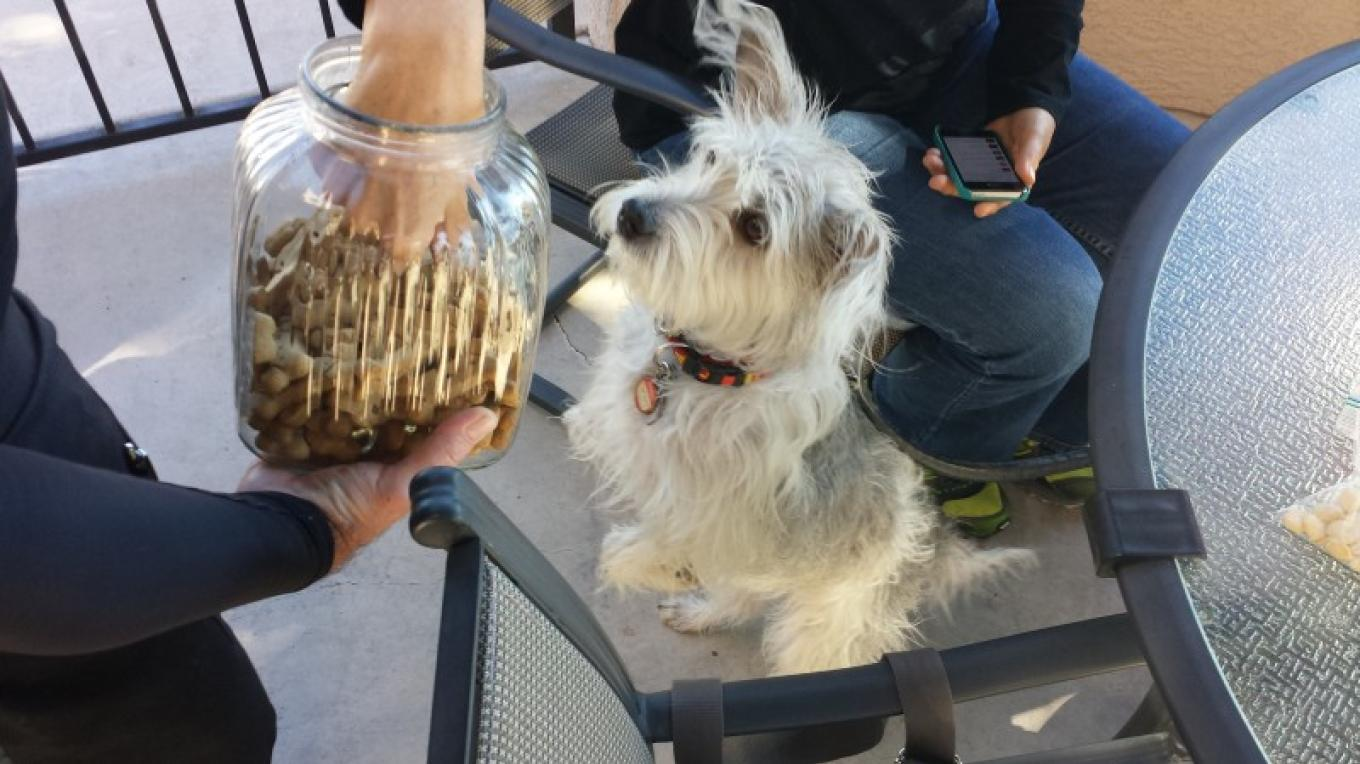 Pet friendly patio when... weather permits