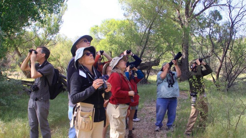 Birding in the Verde Valley