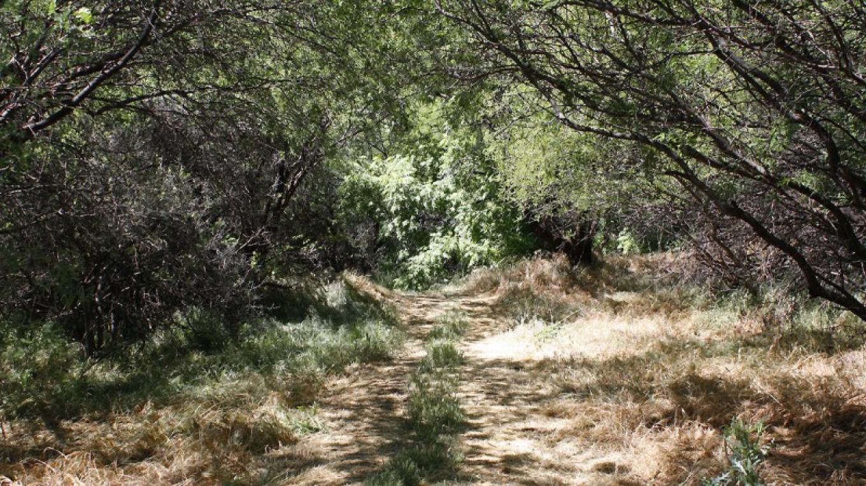 Trail through a Mesquite forest. – Dennis Tomko