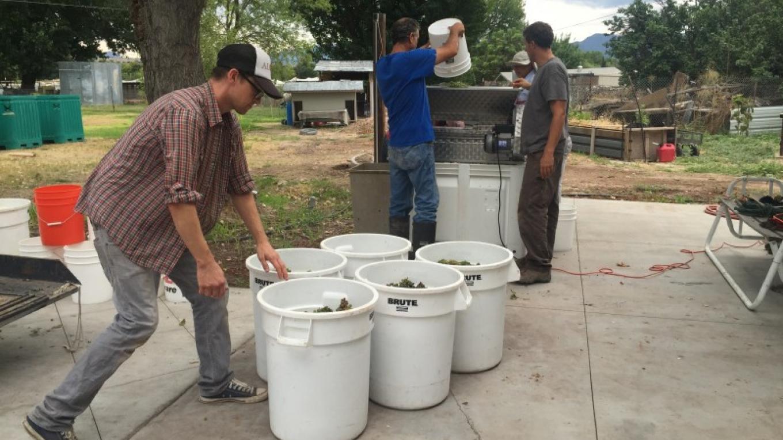 Crushing & Destemming the white grapes 2015 – SL MESA