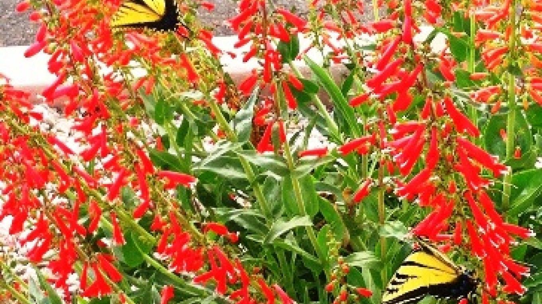 Spring Butterflies – Jodie Filardo