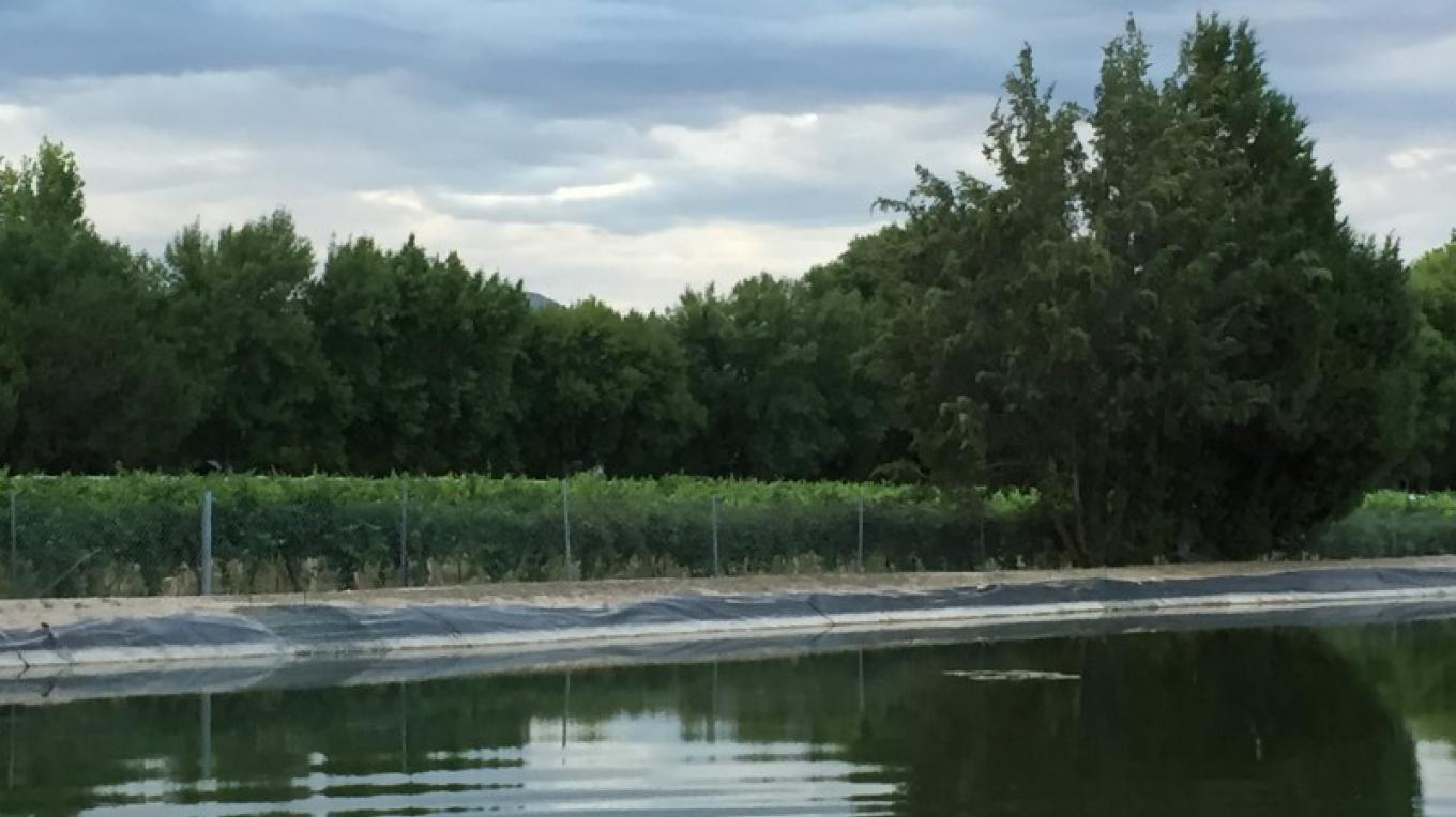 The vines and the pond – SL MESA