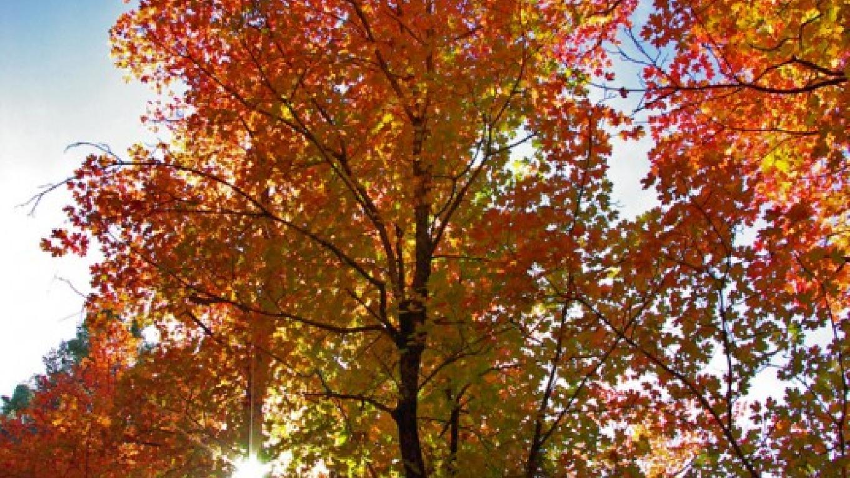 Fall colors. Mogollon Rim Ranger District. – Gary Garner, Coconino National Forest Employee