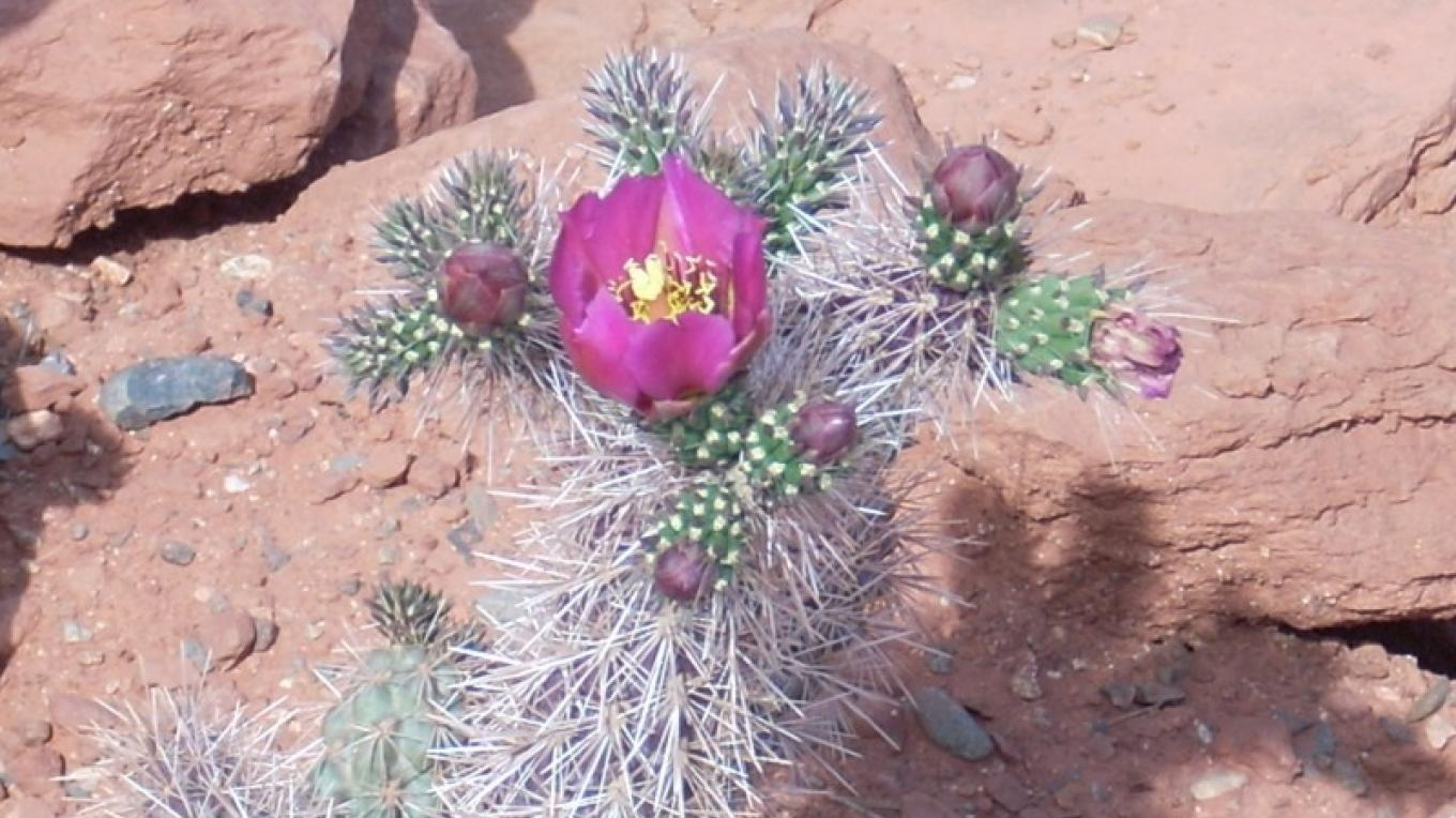 Purple Desert Flowers – Barbara J. Kimbro