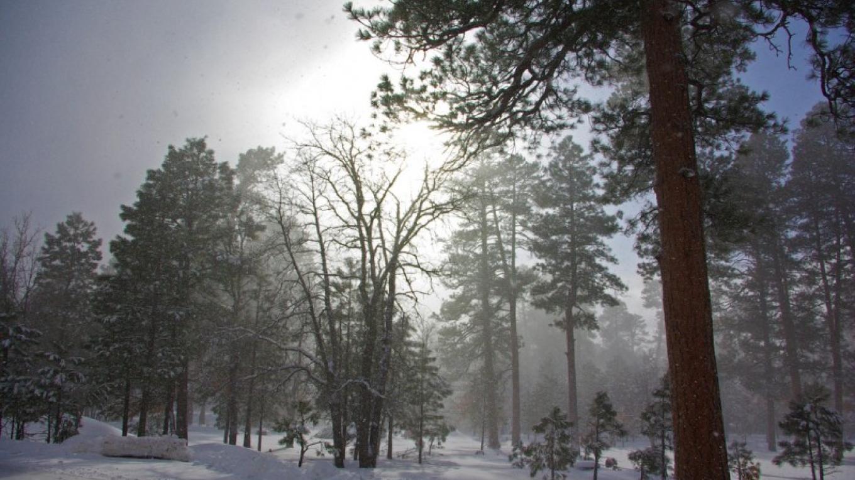 Snowy day near the Mogollon Rim Ranger Station on Highway 87. – Gary Garner, Coconino National Forest Employee