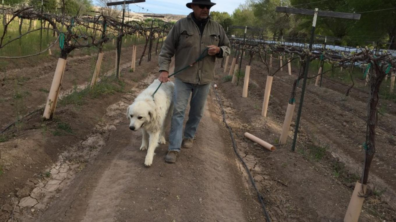 Walking the winter vineyard – SL MESA