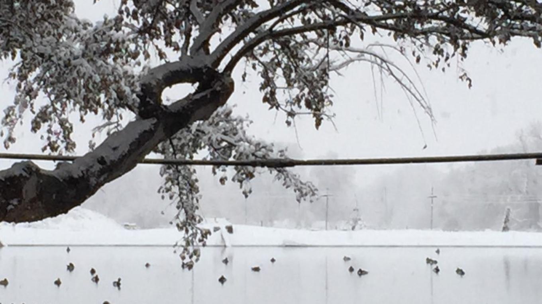 Snow on the pond – IM MESA