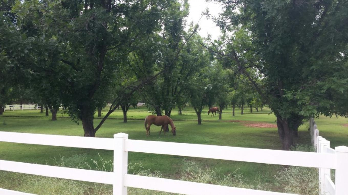 Pecan Orchards across the street