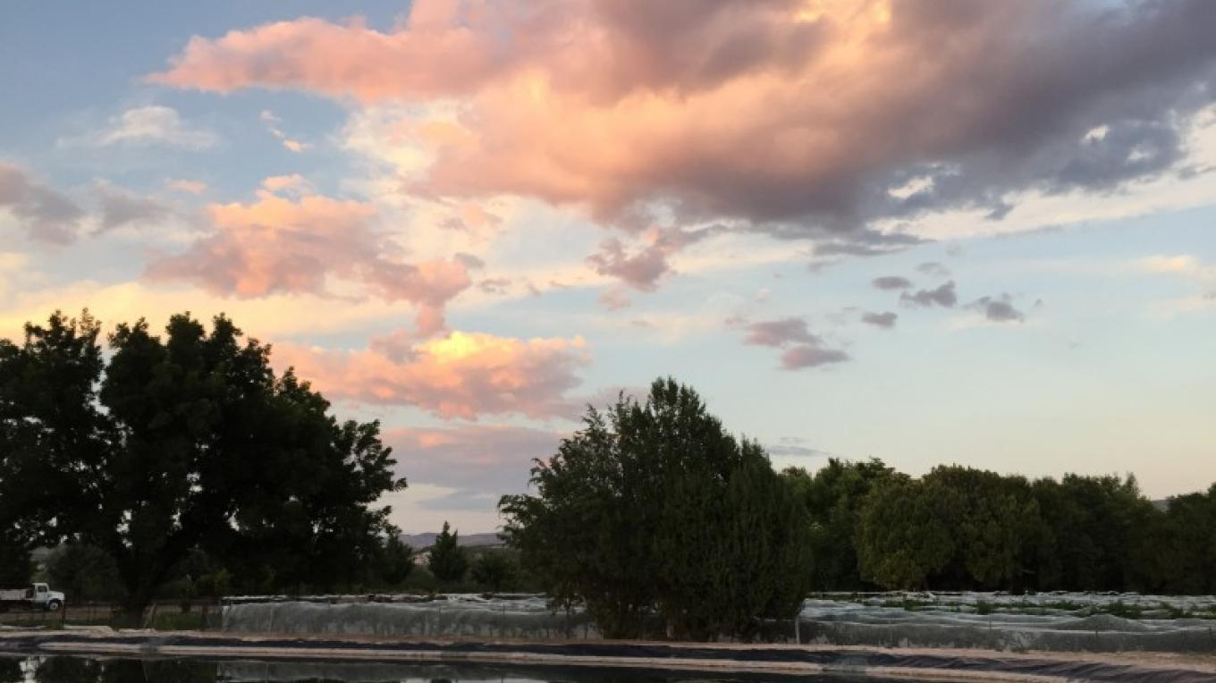An amazing view over the vineyard pond – IM MESA
