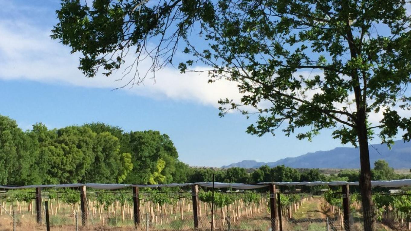 Early Spring view of the vineyard – SL MESA