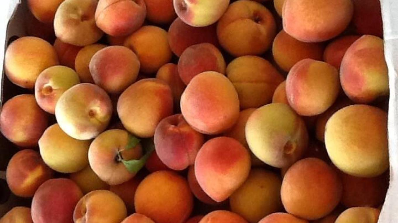 Peaches from Charlie Johnson's orchards in Camp Verde — at Verde Valley Farmers Market. – Farmers Market