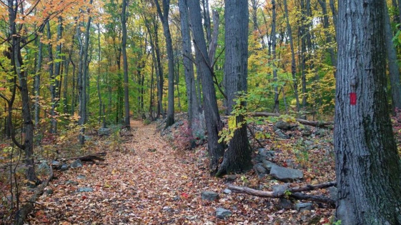 Rockport WMA Trail – Corey Tierney