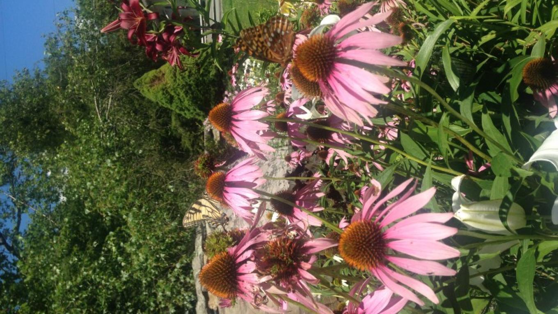 Gardens 2015 – Caitlin Kellermeyer