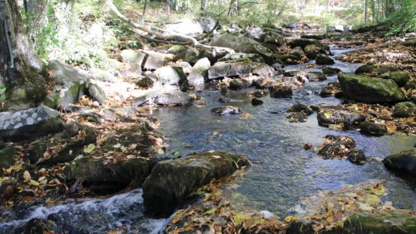 Brodhead Creek runs through one side of Paradise-Price Preserve. – Nancy J. Hopping
