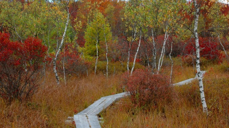 Fall splendor at The Nature Conservancy's Thomas Darling Preserve – George C. Gress