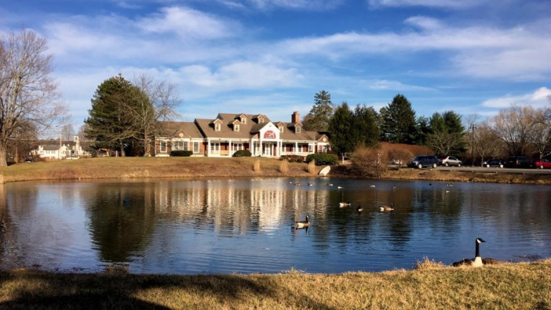 Canada Geese enjoy the pond year-round – Bruce Brandli