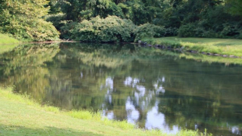 Fishing pond for children. – Nancy J. Hopping